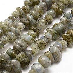 """Chapelets de perles en labradorite naturelle , nuggets, 3~7x7~11mm, trou: 1mm; 15.7"""" (40cm)(G-P302-13)"""