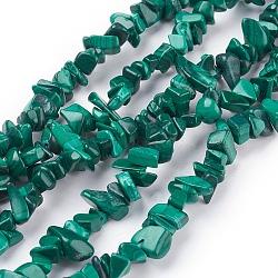 Chapelets de perles en malachite naturelle, puces, 5~14x4~10x2~6mm, Trou: 1mm(X-G-F079-02)