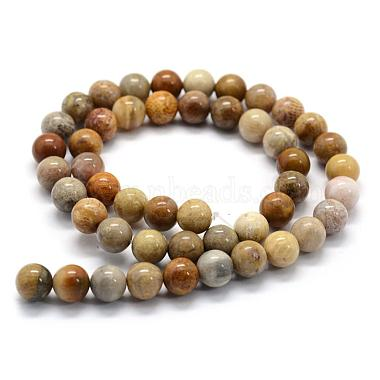 Natural Fossil Coral Beads Strands(G-G763-12-6mm)-4