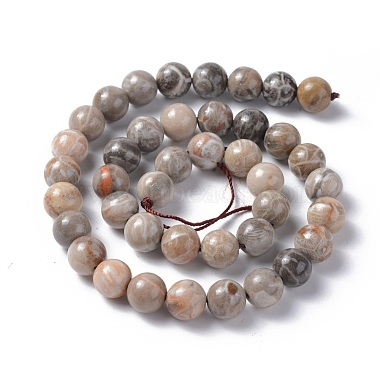 Natural Fossil Coral Beads Strands(G-G212-10mm-31)-2