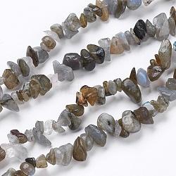 """Pépites labradorite naturelle brins de perles, 4~6x8~12x2~4mm, trou: 1 mm; environ 34.6""""(G-M344-33)"""