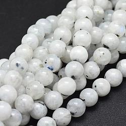 Naturelles Moonstone perles brins, arrondir, 8 mm, trou: 1 mm; environ 48 perle / brin, 15.5 pouces (39.5 cm)