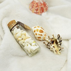 Glass Wishing Bottles, with Shell, Noctilucent powder and Wishing Paper Inside, FloralWhite, 77x27mm(X-DJEW-J001-04)