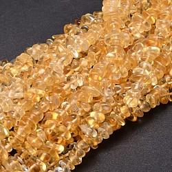 """Естественно цитрин чипов бисера пряди, 5~14x4~10 мм, отверстия: 1 mm; о 15.5""""~16.1""""(G-E271-100)"""