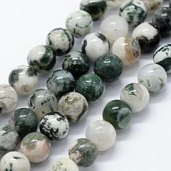 """Chapelets de perles en agate d'arbre naturelle, rond, 6mm, trou: 1.2mm; environ 63 pcs/chapelet, 14.76"""" (37.5 cm)(G-I199-03-6mm)"""