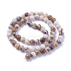 """Chapelets de perles en bois pétrifié amérique naturelle, facette, rond, 6mm, trou: 1mm; environ 63~64 pcs/chapelet, 14.96""""~15.35'' (38~39 cm)(G-P430-15-B)"""