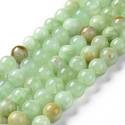 """Chapelets de perles en préhnite naturelle, teint, rond, 8mm, trou: 1.4mm; environ 50 pcs/chapelet, 15.75"""" (40 cm)(G-I261-E03-8mm)"""