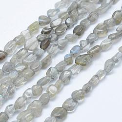 """Chapelets de perles en labradorite naturelle , nuggets, 5x4mm, trou: 1mm; 15.7""""~15.9"""" (40~40.5cm)(G-K203-12)"""