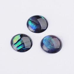 ormeau / paua cabochons shell, demi-tour / dôme, coloré, 8x1~1.5 mm(SSHEL-K003-8MM)