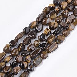 naturelles oeil de tigre brins de perles, nuggets, 8~19x8~12x4~8 mm, trou: 0.8 mm; environ 37 perle / brin, 15.9(G-T105-40)