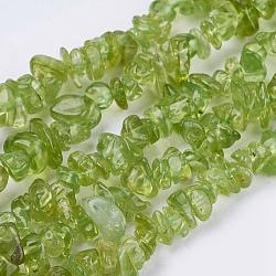 Chapelets de perles en péridot naturel, puce, olivedrab, 3~7x2~4x2~4mm, Trou: 1mm(X-G-J119-04)