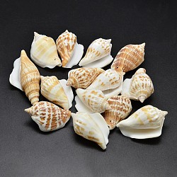 Natural Conch Shell Beads, Goldenrod, 40~65x20~25mm, Hole: 1~2mm(X-BSHE-O007-57)