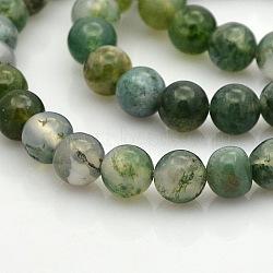 """Agate mousse naturelle chapelets de perles rondes, 6mm, trou: 1mm; environ 61 pcs/chapelet, 15.7""""(G-N0120-30-6mm)"""